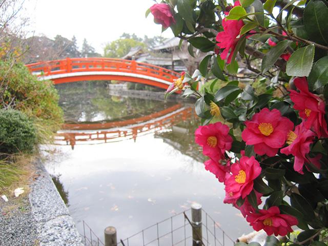 神泉苑 - 法成橋と山茶花