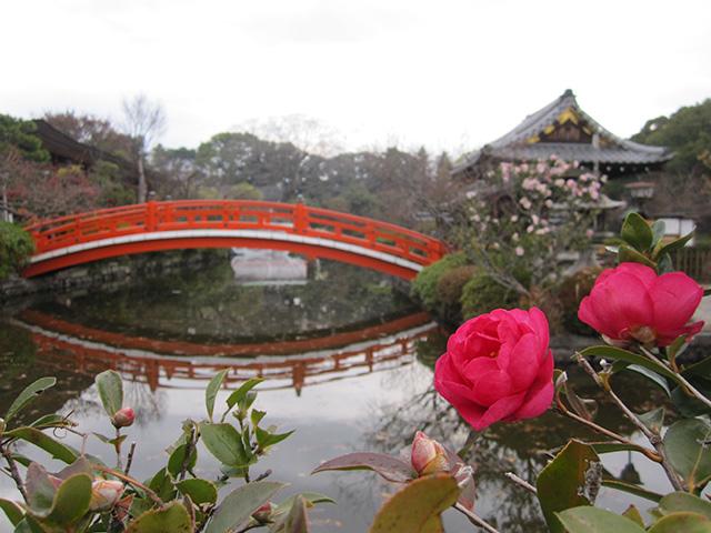 神泉苑 - 法成橋と山茶花2