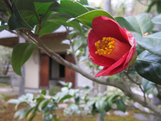 松花堂庭園 - 松花堂と椿