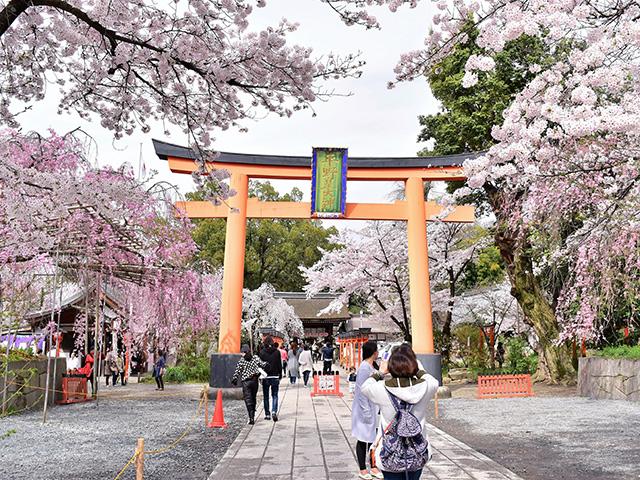 平野神社 - 境内1