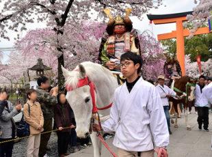 平野神社 - 桜花祭EC