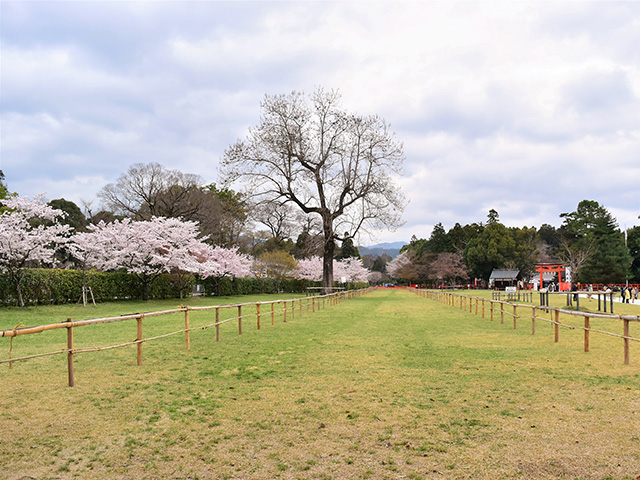 上賀茂神社 - 馬場1