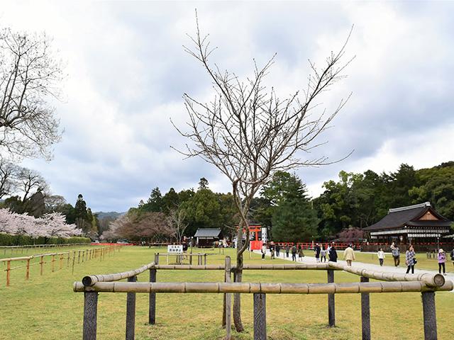 上賀茂神社 - 馬場2