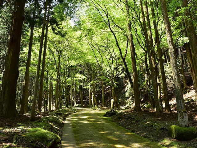古知谷阿弥陀寺 - 参道