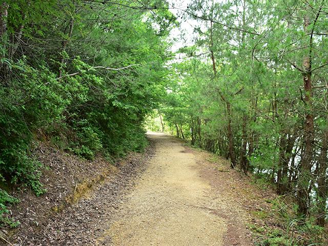 北山杉の里 - 沢の池2