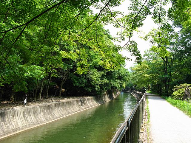 山科疎水(琵琶湖疎水)1