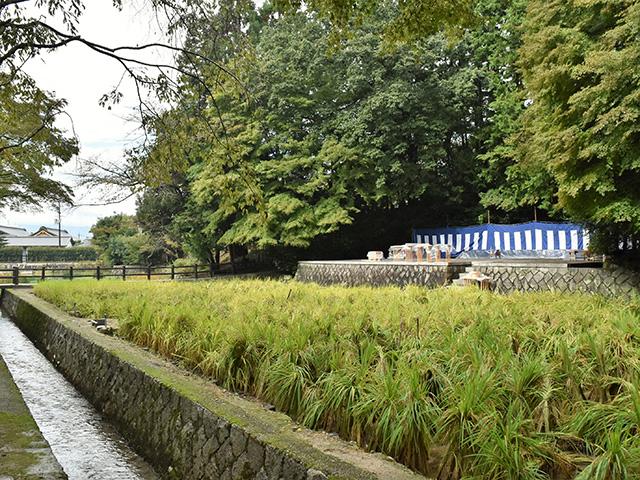 伏見稲荷大社 - 神田1