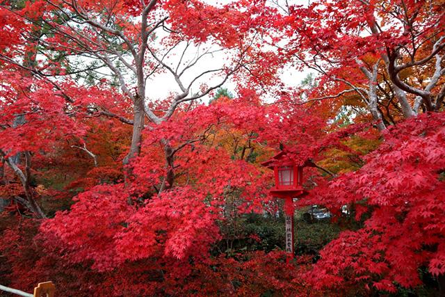 鍬山神社の紅葉2