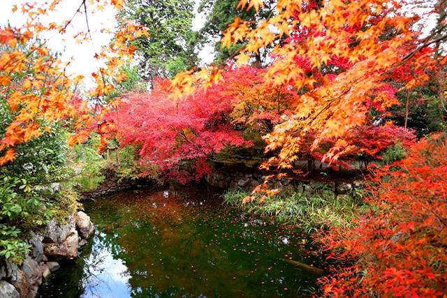 鍬山神社の紅葉5