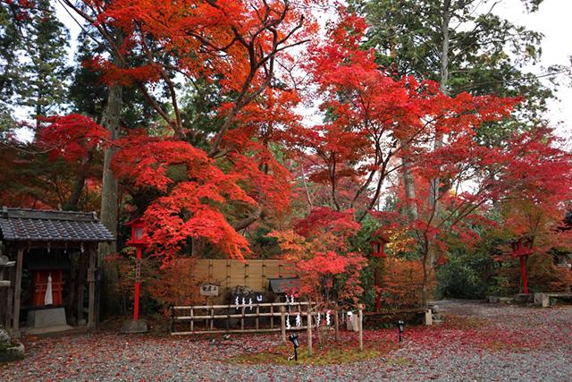 鍬山神社の紅葉6