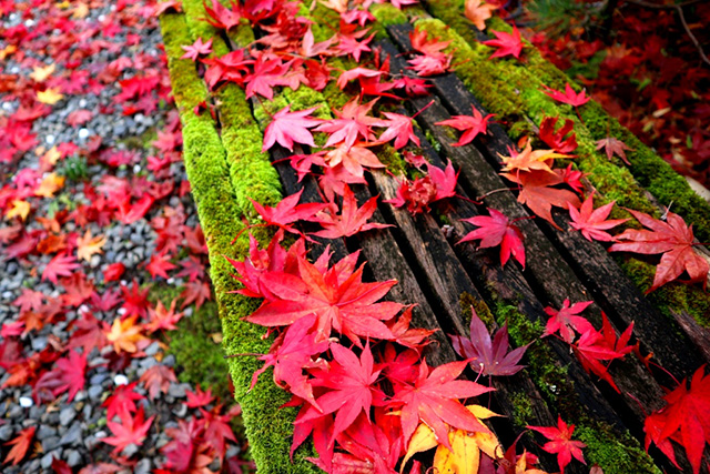 鍬山神社の紅葉7
