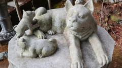犬好き必見の寺社めぐりEC