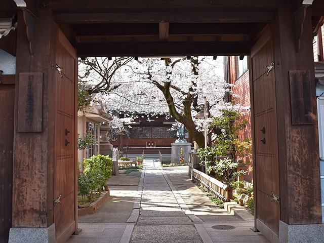 墨染寺 - 桜1