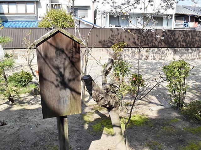 墨染寺 - 墨染桜1