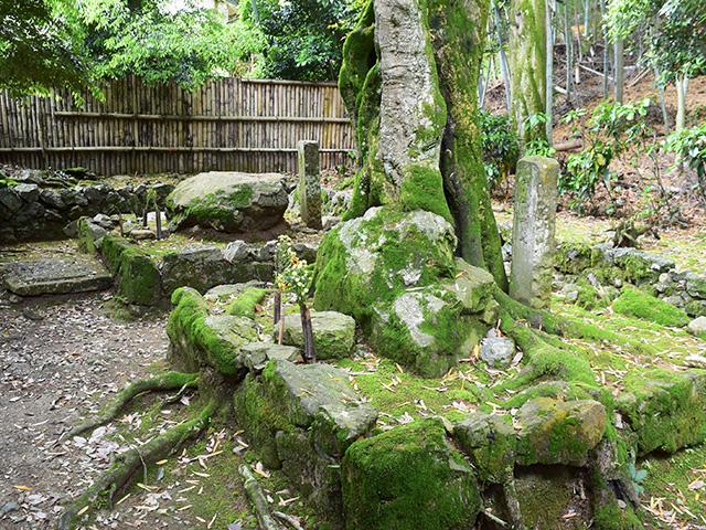 地蔵院 - 墓