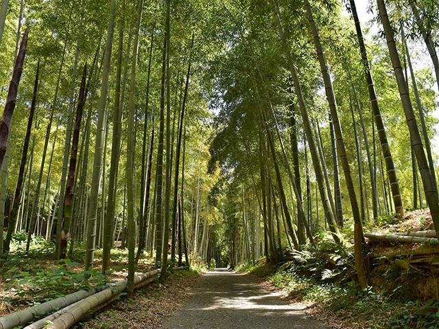 京都一周トレイル(東山コース)- 竹林