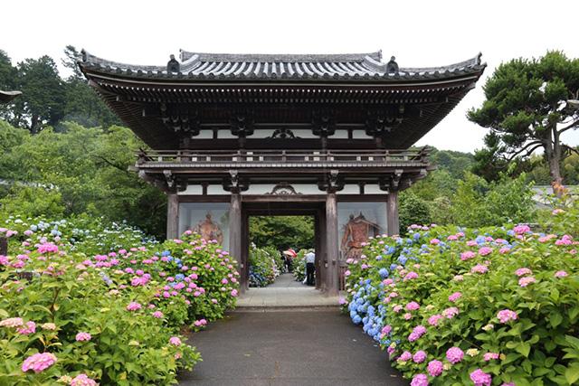 丹州観音寺(あじさい寺)3