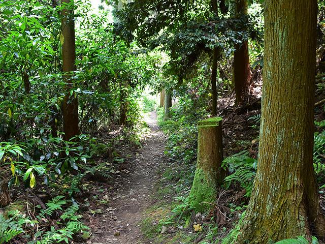 京女鳥部の森