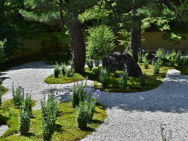 廬山寺 - 庭園1
