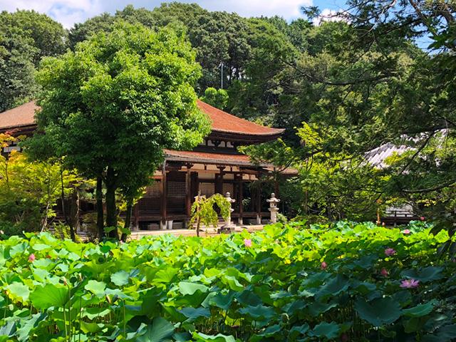 法界寺 - 庭園1