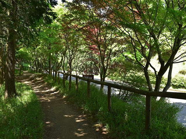 峰道2(京都一周トレイル)