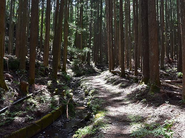 京都一周トレイル - 旧道
