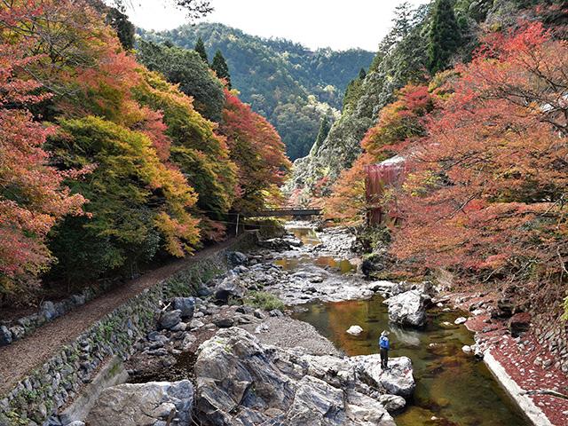 清滝3(京都一周トレイル)