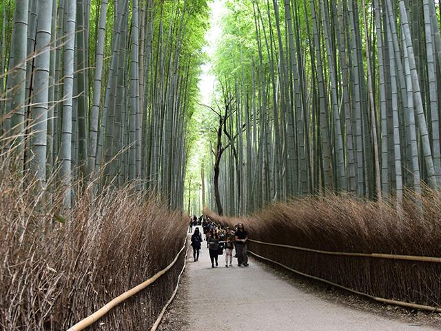 嵐山6(京都一周トレイル Vol.11)