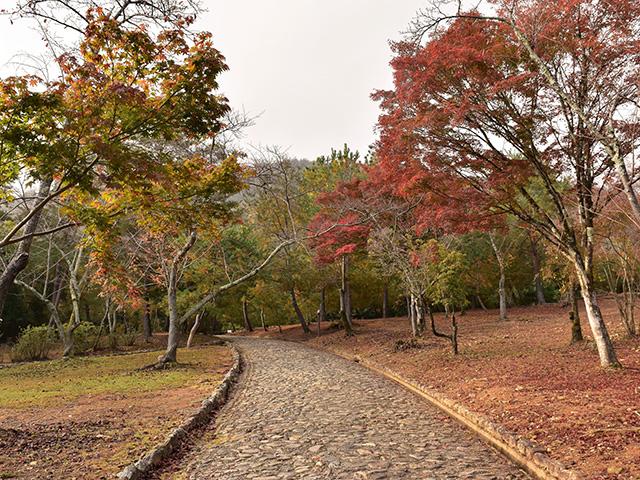 嵐山7(京都一周トレイル Vol.11)