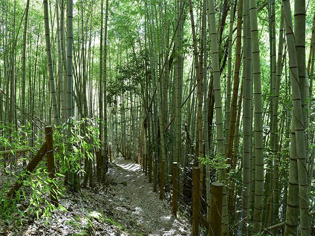 松尾山5(京都一周トレイル Vol.12)