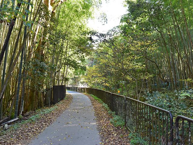松尾山6(京都一周トレイル Vol.12)
