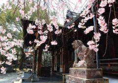 向日神社4