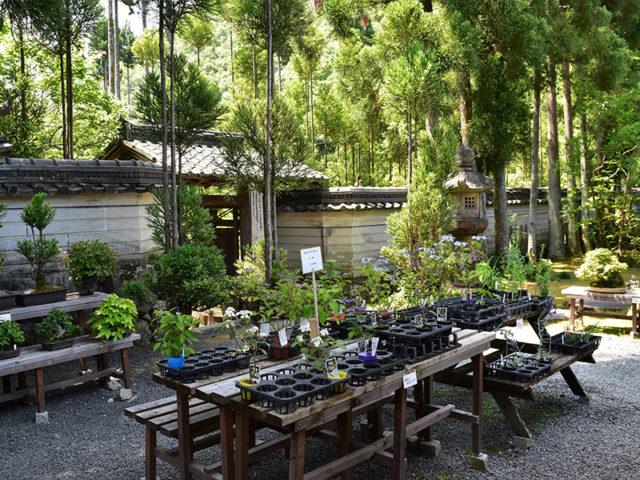 しょうざん庭園2