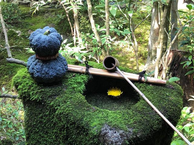 安楽寺 - 鹿ヶ谷かぼちゃ3