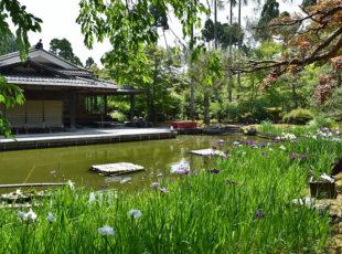 洛北の「しょうざん庭園」で、花菖蒲を楽しむ